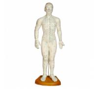 Модель для акупунктуры - Мужчина (50см)
